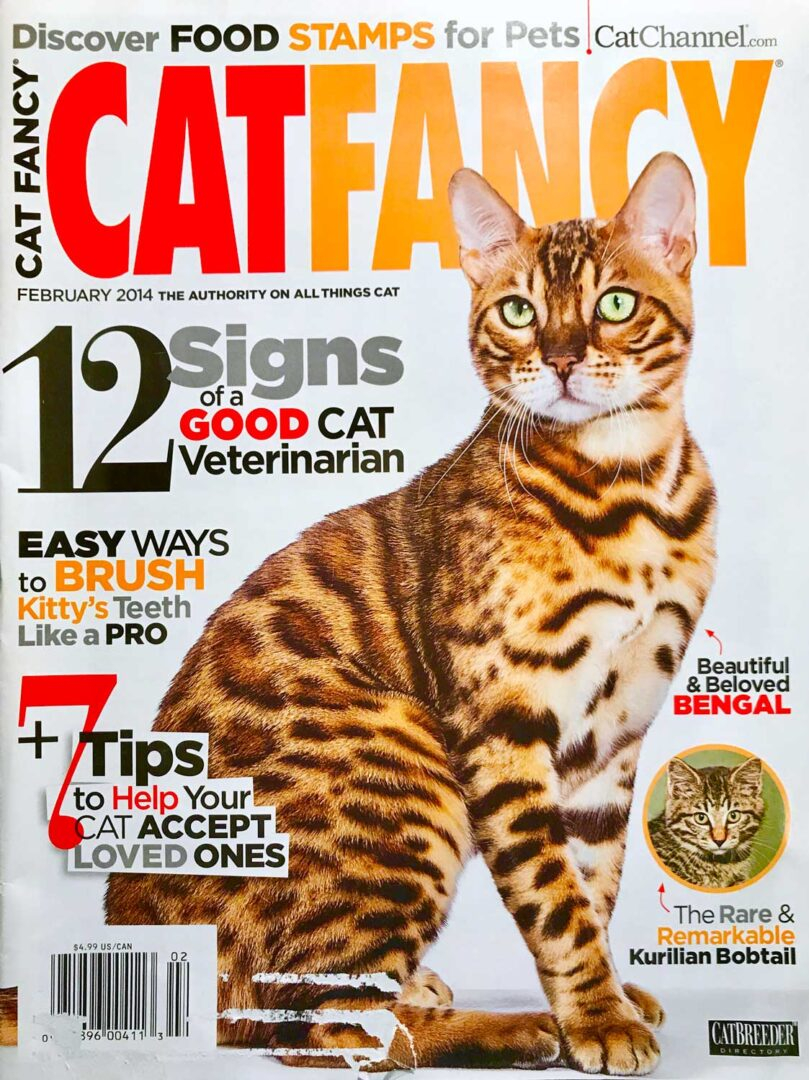 e99ebb92 About Us - URBAN EXOTIC CATS